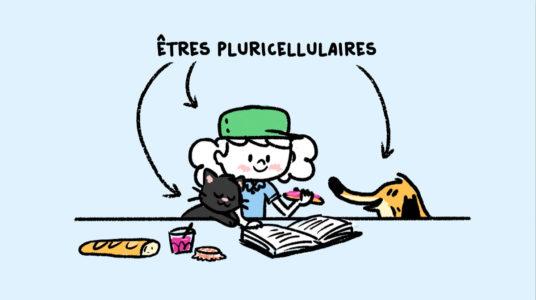 Êtres pluricellulaires