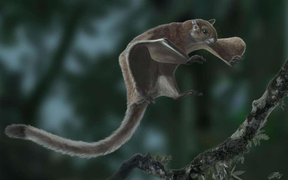 découverte du plus ancien fossile d'écureuil volant