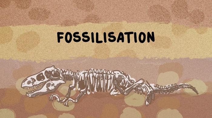 C'est quoi, un fossile ?
