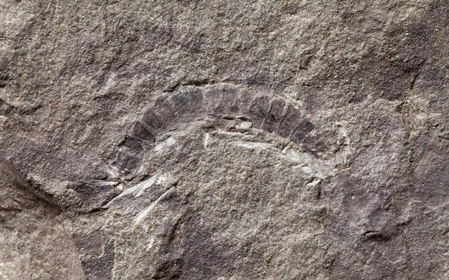 Fossile découvert en Écosse