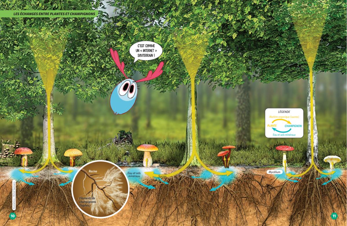 Association plantes champignons