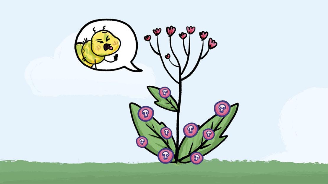 Est-ce que les plantes communiquent ?