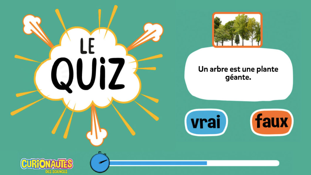Quiz Curio : Teste tes connaissances sur les arbres