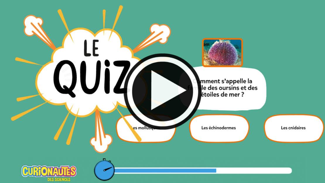 Quiz Curio : Teste tes connaissances sur la mer - Curionautes magazine